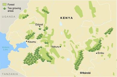 Tea-production-areas-and-forest-distribution-in-kenya.jpeg